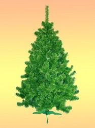 Sosna zielono-zielona